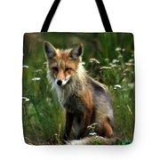 Kit Red Fox Tote Bag