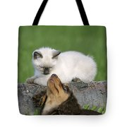 Kitten And Puppy Playing Tote Bag