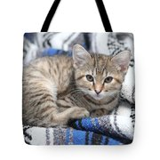 Kitten In The Blanket Tote Bag