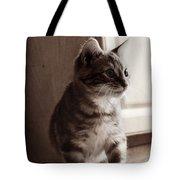 Kitten In The Light Tote Bag