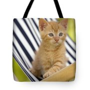 Kitten On Chair Tote Bag