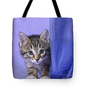 Kitten With A Curtain Tote Bag