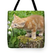 Kitten With Flowers Tote Bag