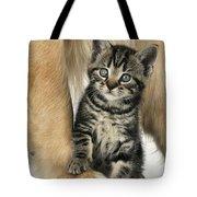 Kitten With Golden Retriever Tote Bag