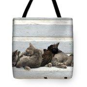Kittens In Hydra Island Tote Bag