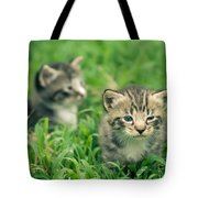 Kitty In Grass Tote Bag