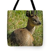 Klipspringer Antelope Tote Bag