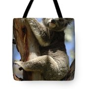 Koala Tote Bag by Bob Christopher