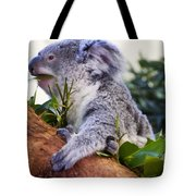 Koala Eating In A Tree Tote Bag