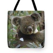 Koala Male In Eucalyptus Australia Tote Bag