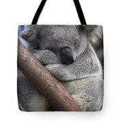 Koala Male Sleeping Australia Tote Bag