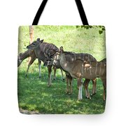 Kudu Antelope In A Straight Line Tote Bag
