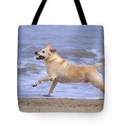Labrador Cross Dog Running Tote Bag by Geoff du Feu
