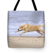 Labrador Dog Chasing Ball On Beach Tote Bag