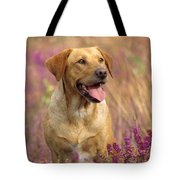Labrador Dog Tote Bag