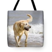 Labrador Dog Playing On Beach Tote Bag