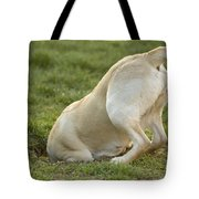 Labrador In Hole Tote Bag