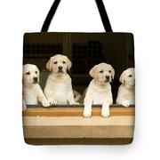 Labrador Puppies At Window Tote Bag