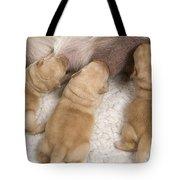 Labrador Puppies Suckling Tote Bag