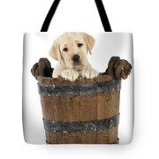 Labrador Puppy In Bucket Tote Bag