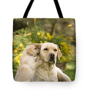 Labrador Puppy Playing With Parent Tote Bag