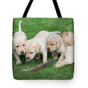 Labrador Retriever Puppies And Feather Tote Bag