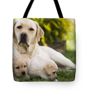 Labrador With Two Puppies Tote Bag