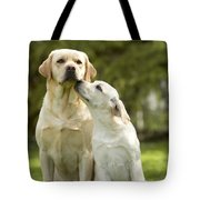 Labradors, Adult And Young Tote Bag