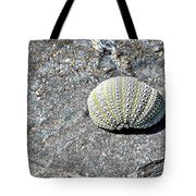Lacy Shell On A Beachrock Tote Bag