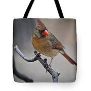 Lady Cardinal Tote Bag by Skip Willits