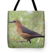 Lady Grackle On A Walk Tote Bag