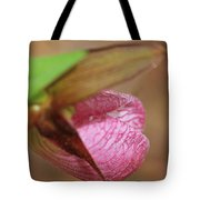 Lady Slipper At Moore State Park Close Up 1 Tote Bag