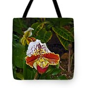 Lady Slipper Orchid Tote Bag
