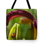 Ladybird Beetle Cuddled By Lily Blossom 4 Tote Bag