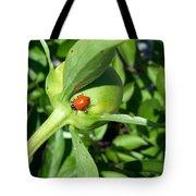 Ladybug Ladybug  Tote Bag