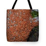 Ladybug Tree Tote Bag