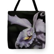 Laeliocattleya Blue Boy 1 Of 2 Tote Bag
