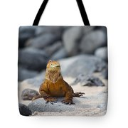 Land Iguana On The Beach Tote Bag
