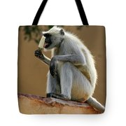 Langur With Kulfi Tote Bag