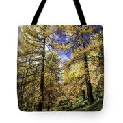 Larch Pines Tote Bag