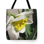 Large-cupped Daffodil Named Ice Follies Tote Bag