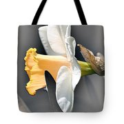 Large-cupped Daffodil Named Mrs. R.o. Backhouse Tote Bag