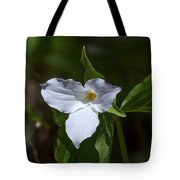 Large-flower Trillium Dspf279 Tote Bag