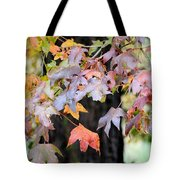 Late Autumn Maples Tote Bag
