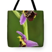 Late Spider Orchid Switzerland Tote Bag