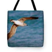 Laughing Gull 002 Tote Bag