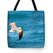 Laughing Gull 003 Tote Bag
