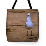 Laughing Gull 004 Tote Bag