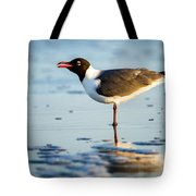 Laughing Gull On The Beach At Fort Clinch State Park Florida  Tote Bag