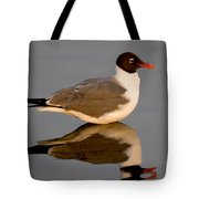Laughing Gull Larus Atricilla Tote Bag